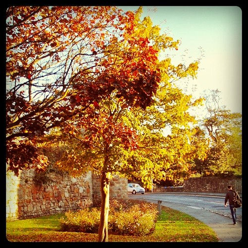 Last October (I miss leaves)