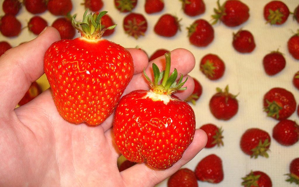 Biggest Berries