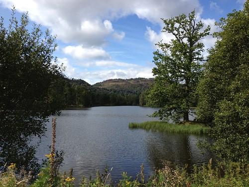 Loch with Island Tree